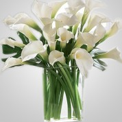 WD820 – 24 Calla Lillies in Vase