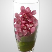 WD860 – Pink Cymbidium Orchids in Vase