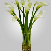 WD810 – 15 White Calla Lillies in Vase