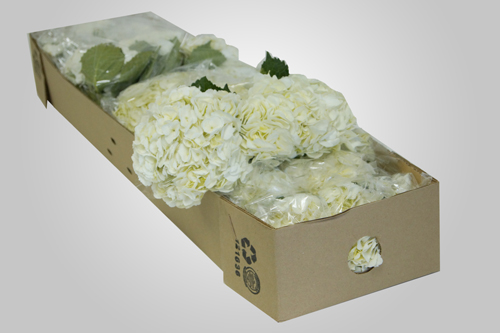 Bulk flowers collection yola guz wedding flowers bhwhite wholesale white hydrangea mightylinksfo