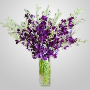 WD850 – Purple Dendrobium Orchids in Vase